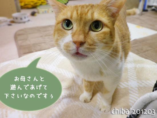 chiba12-03-139x.jpg
