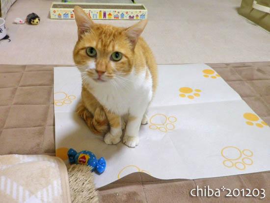 chiba12-03-147.jpg