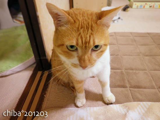 chiba12-03-151.jpg