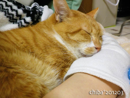 chiba12-03-169.jpg