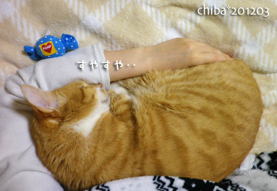 chiba12-03-171.jpg