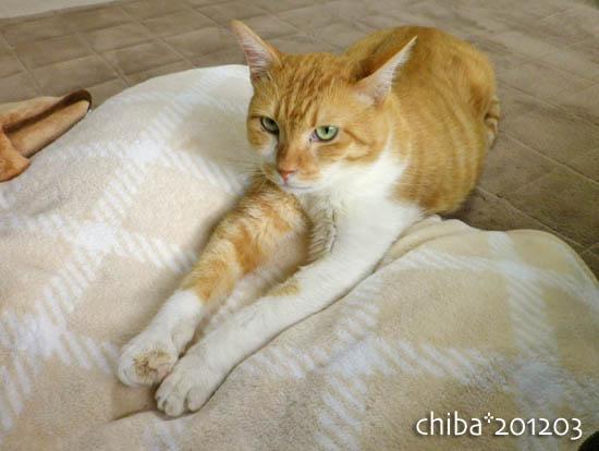 chiba12-03-26.jpg
