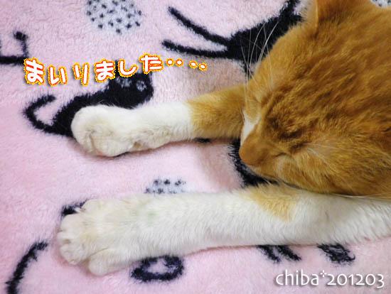 chiba12-03-31.jpg