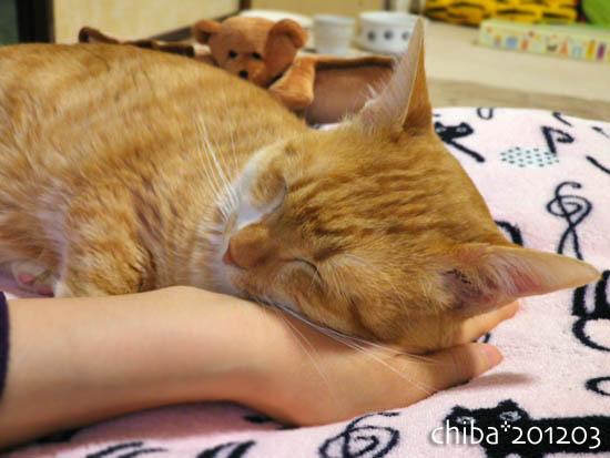 chiba12-03-4.jpg