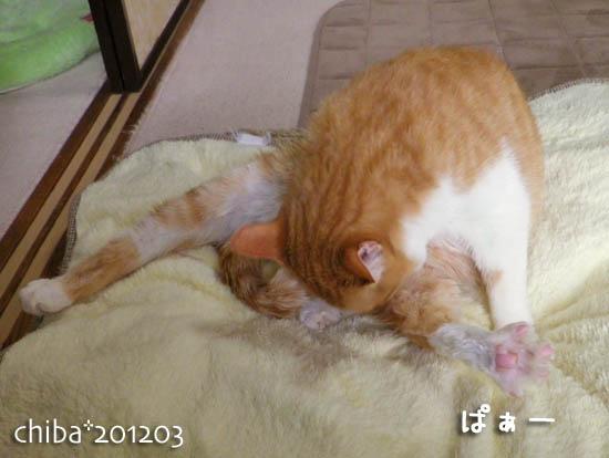 chiba12-03-58.jpg