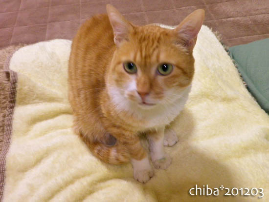 chiba12-03-73.jpg