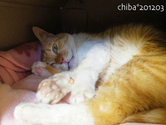 chiba12-03-78.jpg