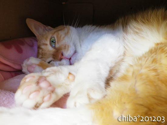 chiba12-03-79.jpg