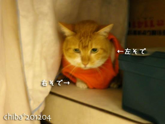 chiba12-04-1.jpg
