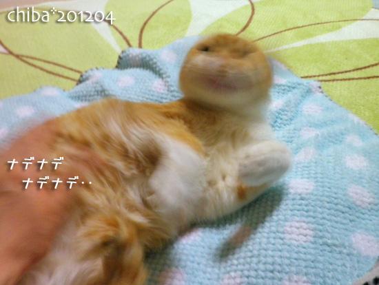 chiba12-04-51.jpg