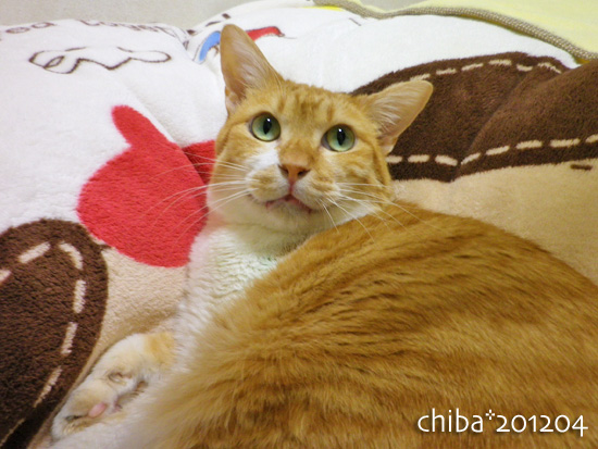 chiba12-04-63.jpg