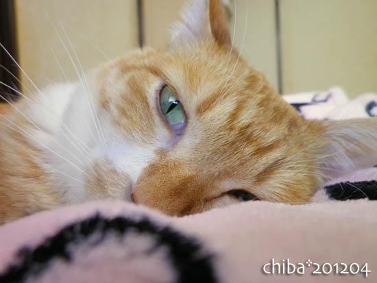 chiba12-04-8.jpg