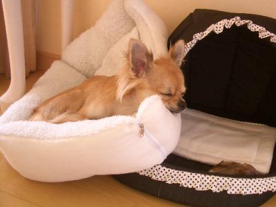 どこで 寝てるの・・