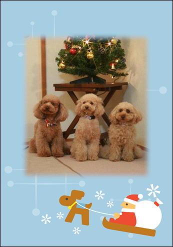 素敵なクリスマスを☆彡