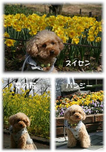 黄色いお花達♪