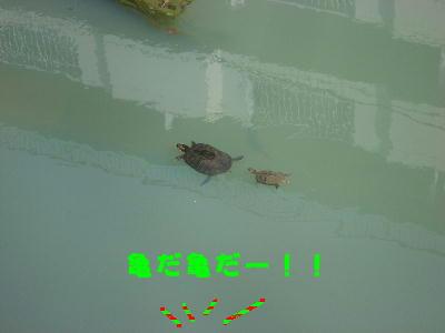 亀がいるー!