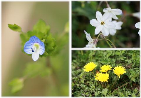 野に咲くお花達