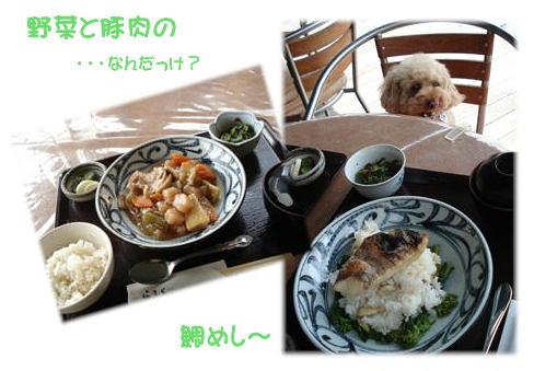 ぷりんとお昼ごはん