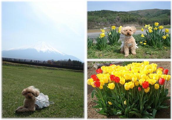富士山ぷりん