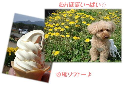 白桃ソフト~♪