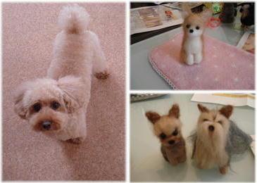羊毛dogs