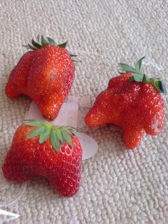 へんなイチゴ