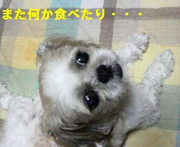 2008091320160001.jpg