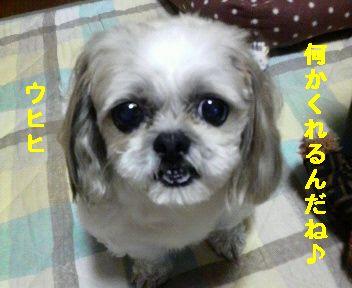 2008101020540001.jpg