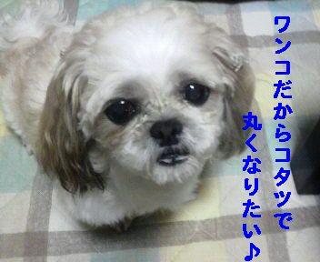 2008103121370001.jpg
