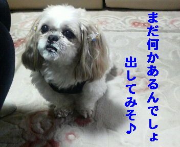 2008110315340001.jpg