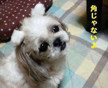 2008111319430001.jpg