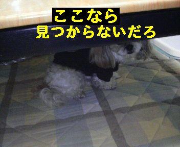 2008112018430000.jpg