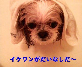 2008112019390000.jpg