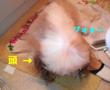 2008112019520000.jpg