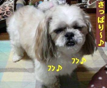 2008112021080001.jpg