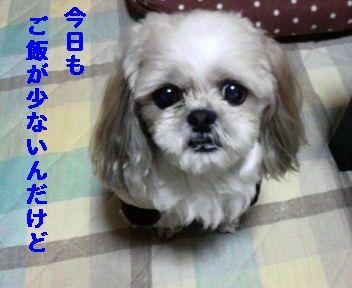 2008121121520000.jpg