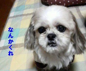 2008121121520001.jpg