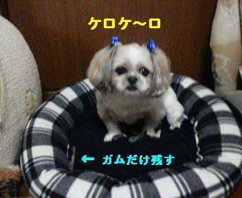 2009021920270000.jpg