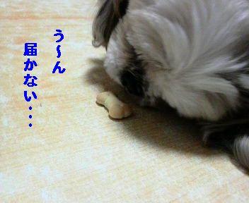 2009040119190000.jpg