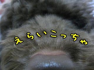 20081005-031_20081012001848.jpg
