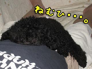 20081005-048_20081015003046.jpg