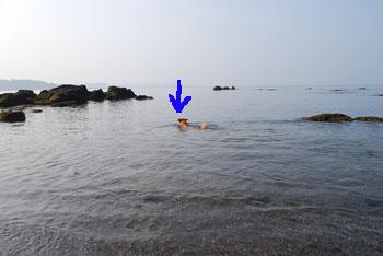 沖に出るララ