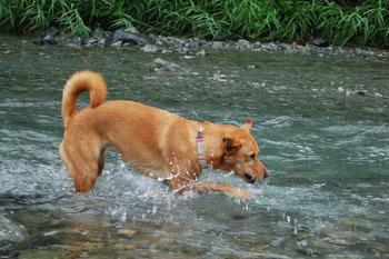 川の中のララ