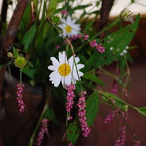 秋の野の花2