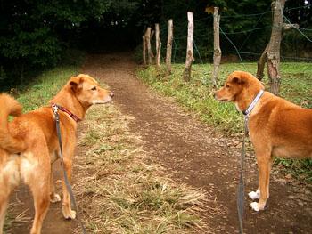 田舎の散歩道