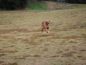 ララ 走る