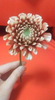 しこちゅー花