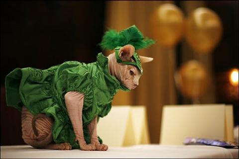 猫のファッションショー