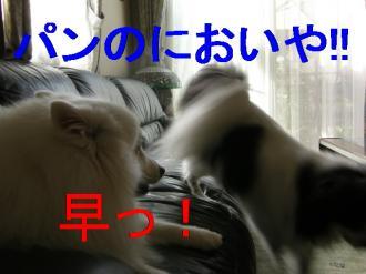 a6_20080906093313.jpg