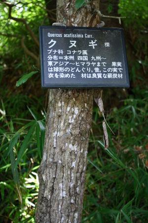 kenminnomori_kunugi.jpg